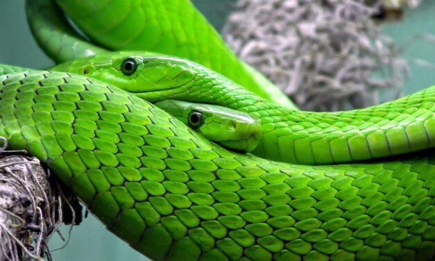 Wake up call: sometimes a snake helps!