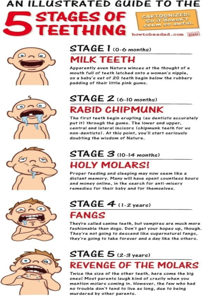 The important stages of Teething