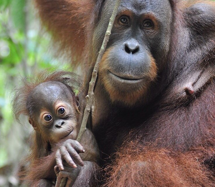 PlayMonster and The Orangutan Project: A Charitable Cause Collaboration